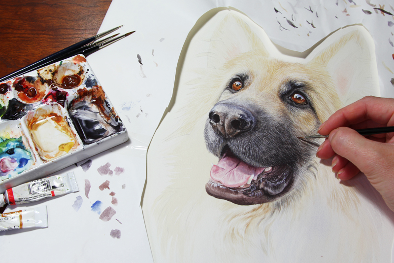 Watercolour portrait of Zac the Alsatian by Sue Hutchings