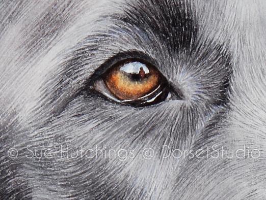 freeman dog watercolour portrait - Sue Hutchings