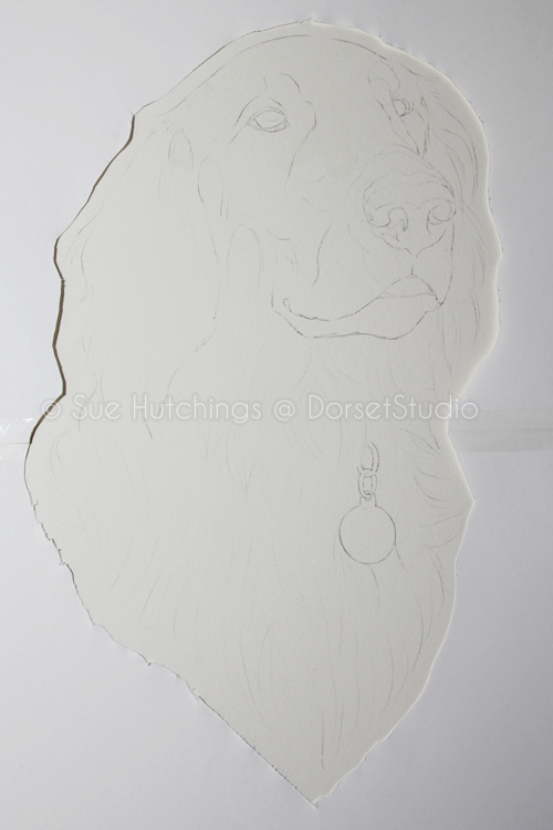 freeman-watercolour animal portrait-sue hutchings_dorset studio-1