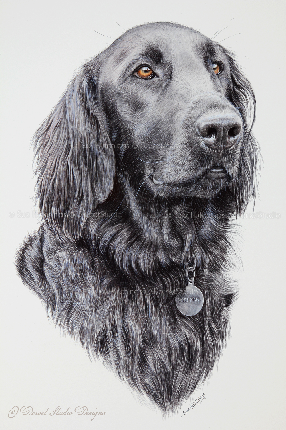 freeman-watercolour animal portrait-sue hutchings_dorset studio-10