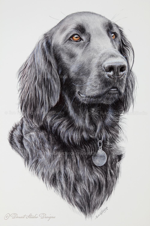 freeman-watercolour animal portrait-sue hutchings_dorset studio-10