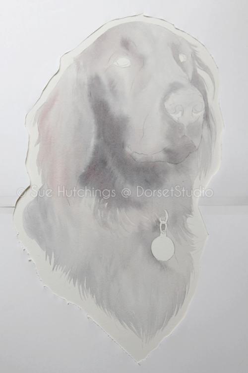 freeman-watercolour animal portrait-sue hutchings_dorset studio-2