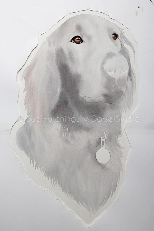 freeman-watercolour animal portrait-sue hutchings_dorset studio-3