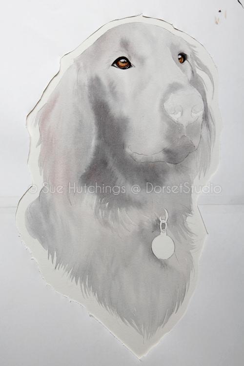 freeman-watercolour animal portrait-sue hutchings_dorset studio-3