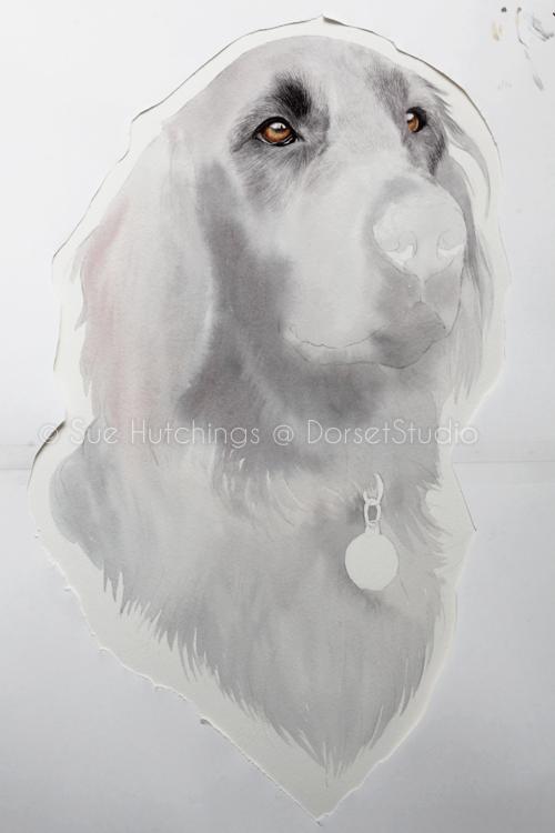 freeman-watercolour animal portrait-sue hutchings_dorset studio-4