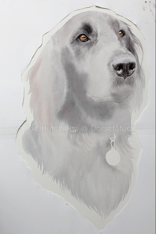 freeman-watercolour animal portrait-sue hutchings_dorset studio-5