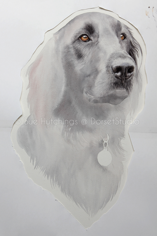 freeman-watercolour animal portrait-sue hutchings_dorset studio-6