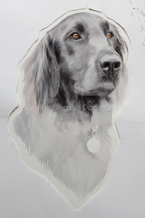 freeman-watercolour animal portrait-sue hutchings_dorset studio-7