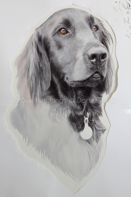 freeman-watercolour animal portrait-sue hutchings_dorset studio-8