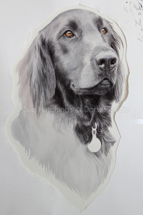 freeman-watercolour animal portrait-sue hutchings_dorset studio-8