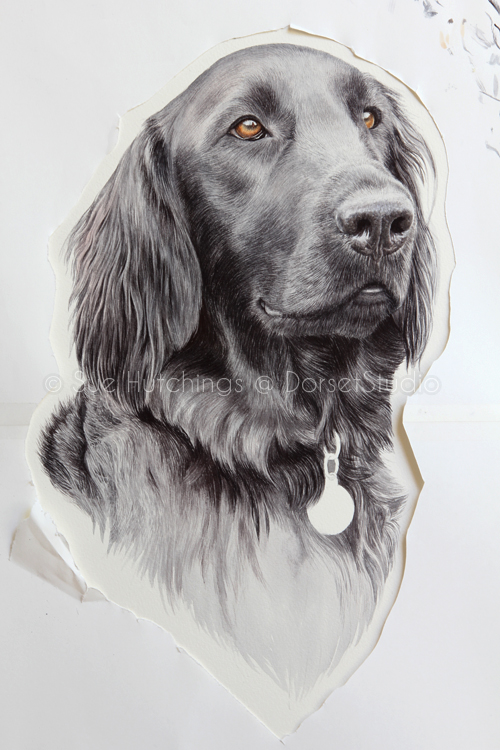 freeman-watercolour animal portrait-sue hutchings_dorset studio-9